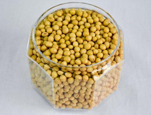 Feijão de soja: Salada de soja